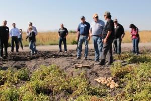 Matt Huffman, John Walker and Danny Lopez talking about chipping potatoes in a field on the Tule Lake Leaselands.