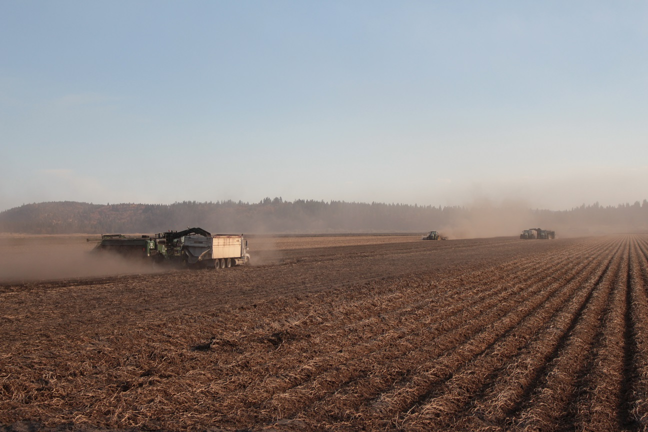 2018 Potato Harvest Caledonia Lots Of Action Gold