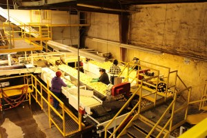 Employees for Gold Dust Potato Processors sorting washed chipping potatoes at the company's packing shed in Malin, Oregon.