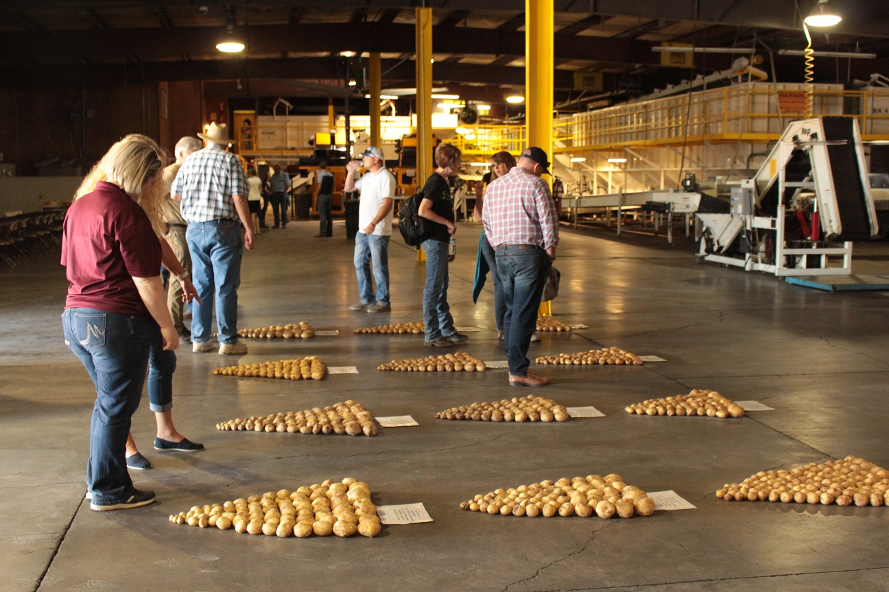 Gold Dust & Walker Farms' guests checking out potatoes at their Malin potato packing plant.