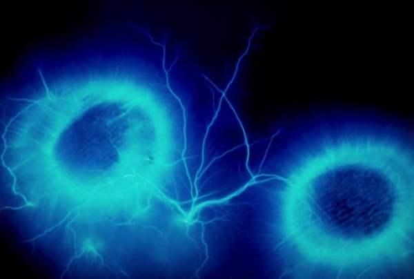 被拍攝下的「情感」科學家揭人體能量場奧秘 7