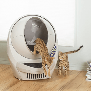 Win a Self Cleaning Kitty Litter-Robot