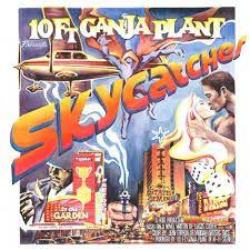 10 Ft Ganja Plant – Skycatcher | Review