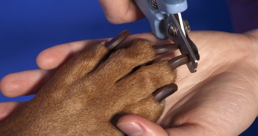 file_135_how-to-trim-a-dogs-nails