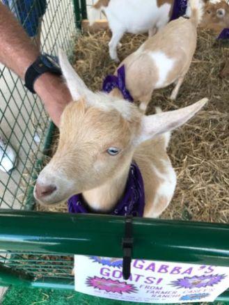 Goats 3