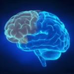 Brain Health and Memory Kit