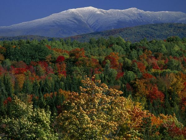 White Mountains and Colorful Canopy