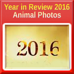 Year in Review 2016 - Animal Photos
