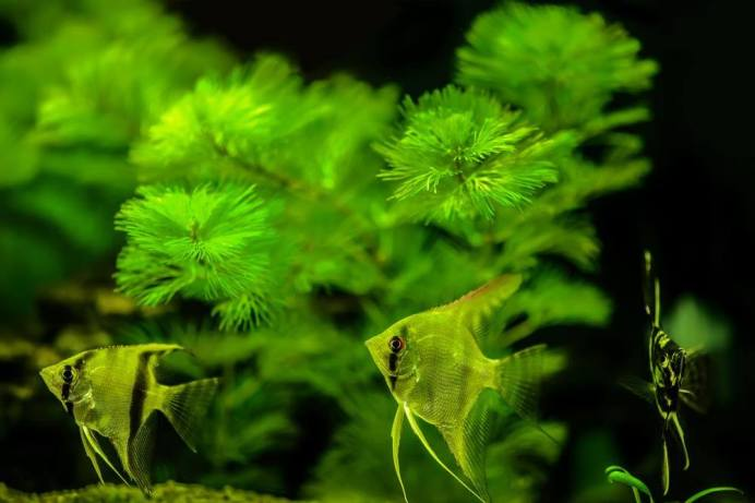 other-species-of-plant-food-for-fish