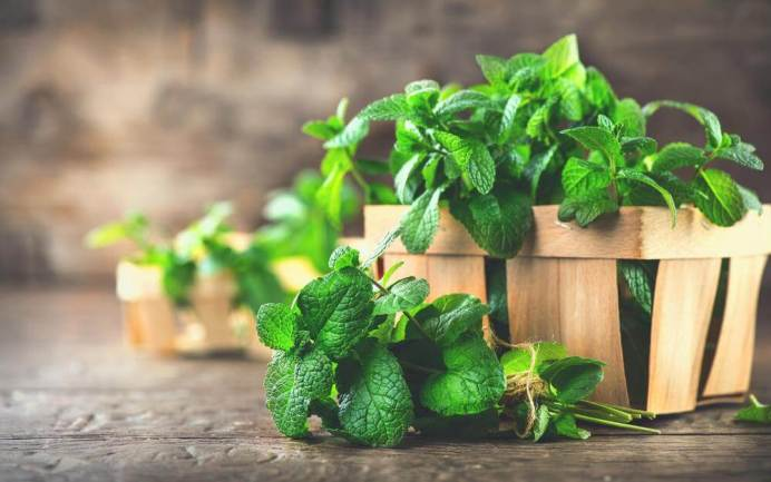 mint for fish food