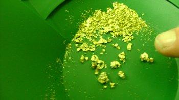 Gold -n pan