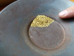 Nice gold in the pan
