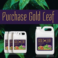 Purchase Gold Leaf