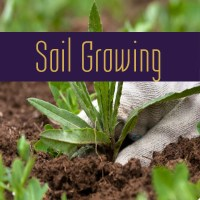 Soil Growing
