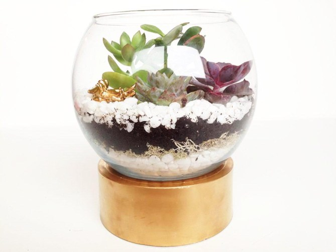 DIY Terrariums 3 Ways - Gold Standard Workshop