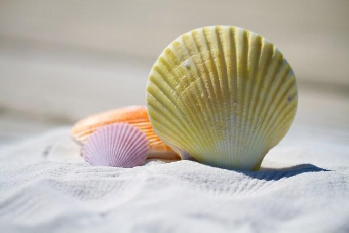 shells beach ergonomic travel