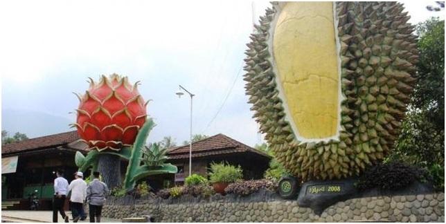 Hutan Durian Terluas Sedunia di Trenggalek