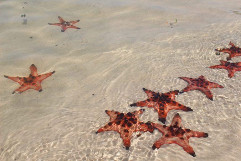 Phu Quoc starfish beach wereldreis