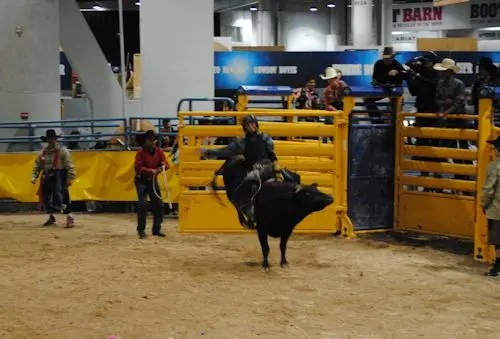 Results Miniature Bullriders Association