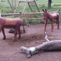 """Jubilan al burro viajero de """"La Laguna Grande"""" en La Gomera"""
