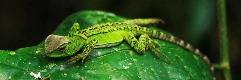 Ecuador Travel - Wildlife