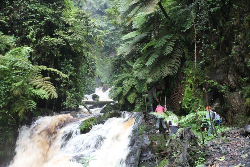 Hiking on a Gorilla Trekking Tour