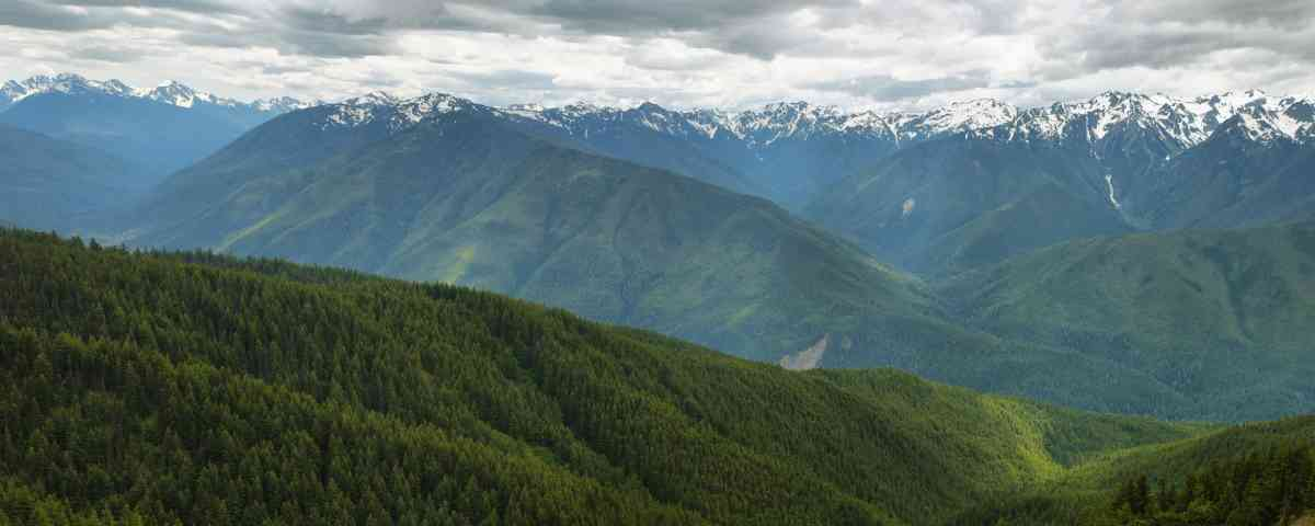 Hurricane Ridge of Olympic National Park
