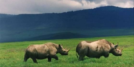 Rhino in the Ngorongoro Crater