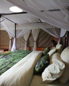 Tortilis Camp Room