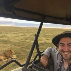 A lion in the Ngorongoro Crater