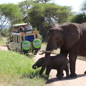 Up Close With Elephants in Tarangire National Park