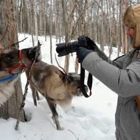 Feed, Photograph and Hike with the Animals at Running Reindeer Ranch