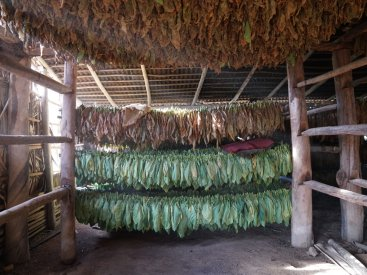 Even if you aren't a tobacco fan it is a beautiful learning experience and tour