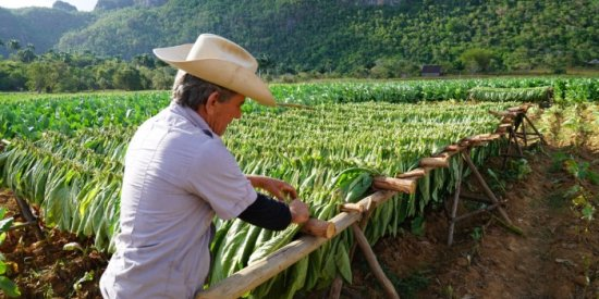 Learn what goes into the world-famous cigars from a 4th generation farmer in Viñales