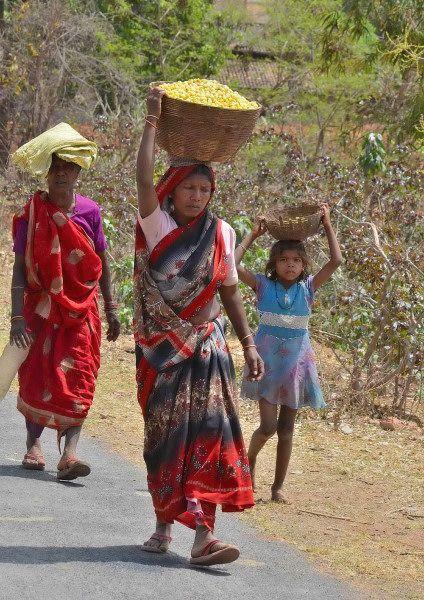 chhattisgarh-tribals-mahua