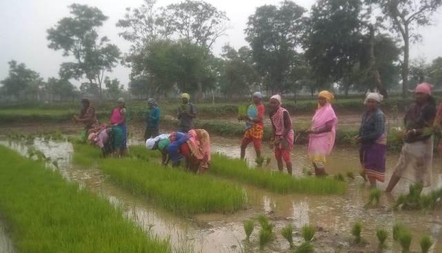 baloda-bazaar-agriculture-news