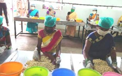 bastar-cashew-production