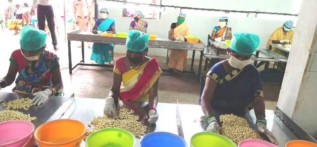 bastar-cashew-production