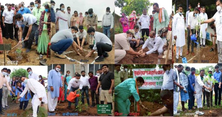 munga-tree-plantation