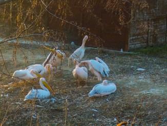 Păsări la Microrezervația Constanța. FOTO Cătălin Schipor