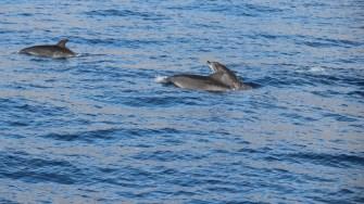 Delfini în Tenerife. FOTO Adrian Boioglu