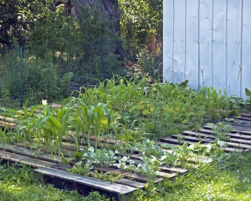 Easy Vegetable Gardening With Pallets 36