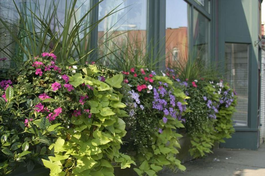 Best Beautiful Cascading Flowers For Window Boxes Ideas 1