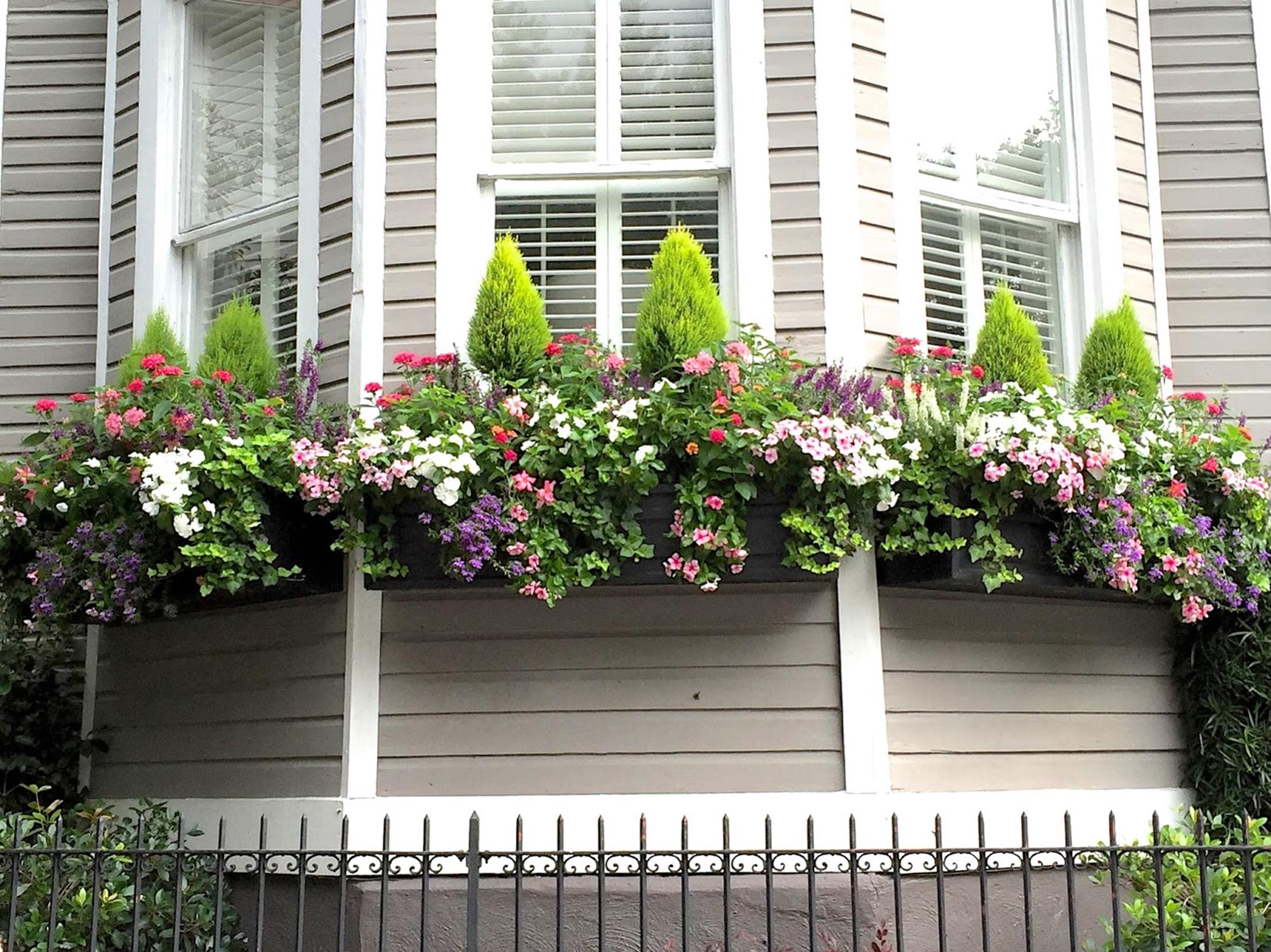 Best Beautiful Cascading Flowers For Window Boxes Ideas 15