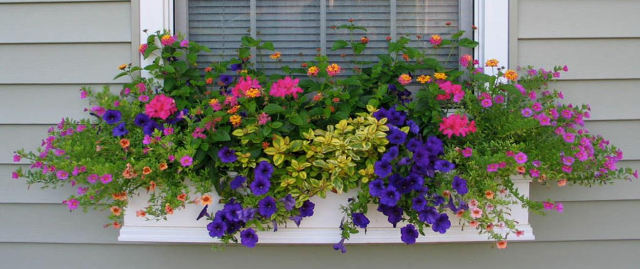 Best Beautiful Cascading Flowers For Window Boxes Ideas 19