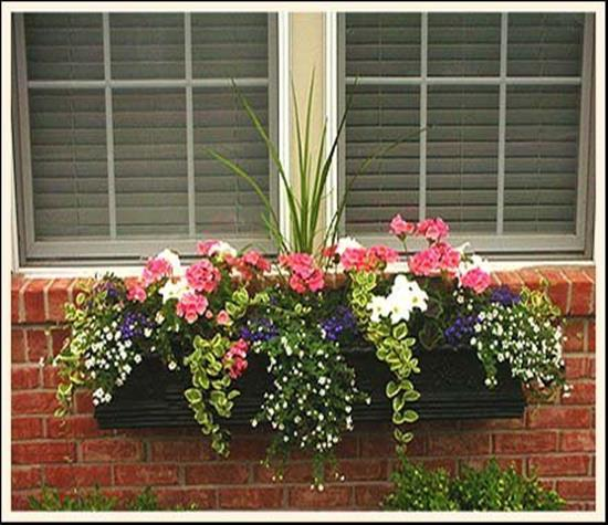 Best Beautiful Cascading Flowers For Window Boxes Ideas 23