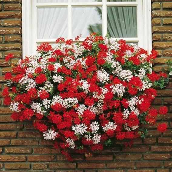 Best Beautiful Cascading Flowers For Window Boxes Ideas 25