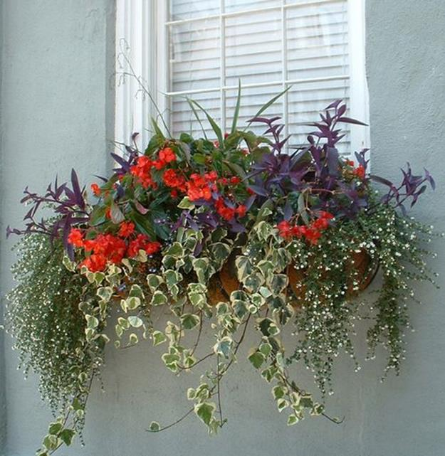 Best Beautiful Cascading Flowers For Window Boxes Ideas 30