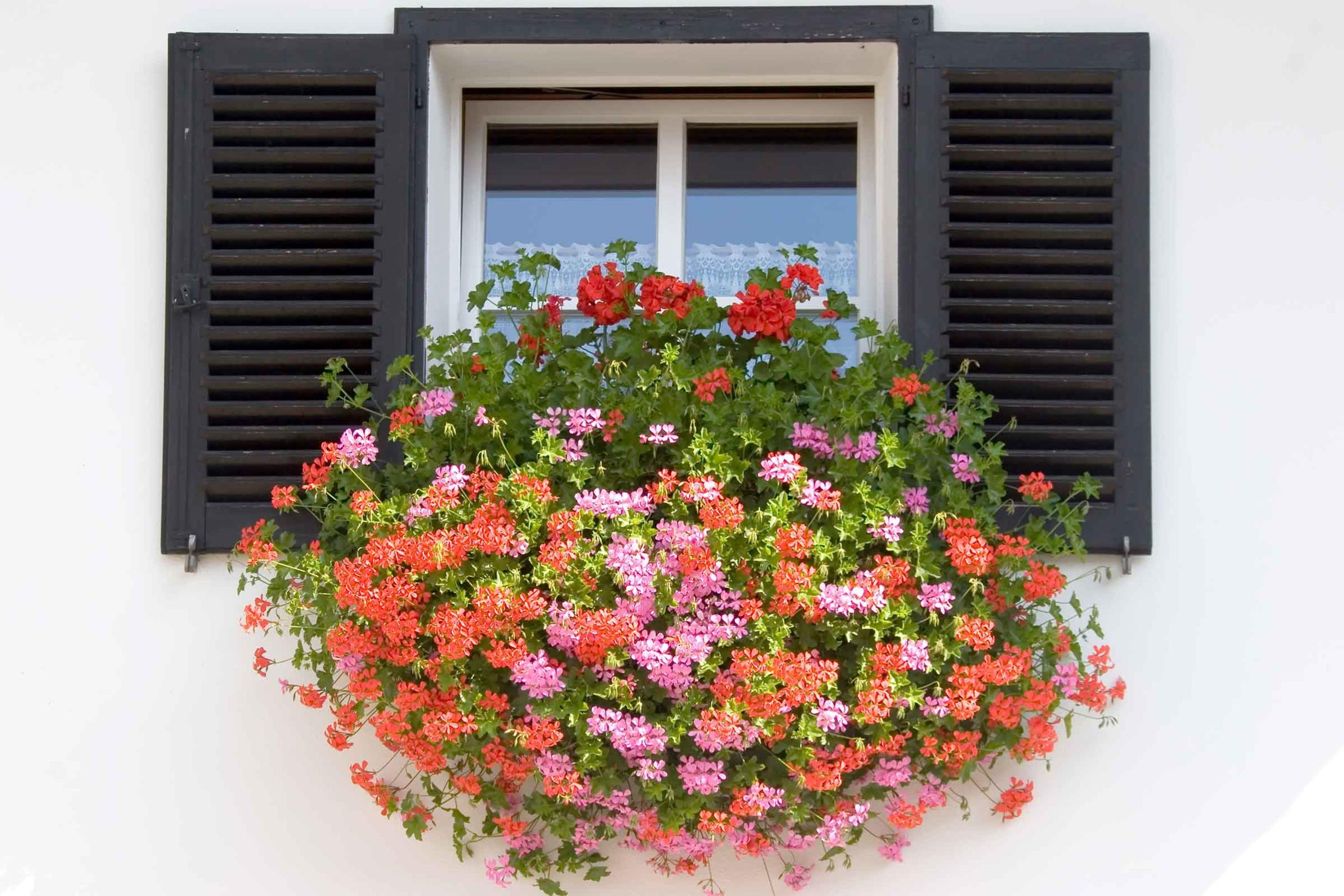 Best Beautiful Cascading Flowers For Window Boxes Ideas 32