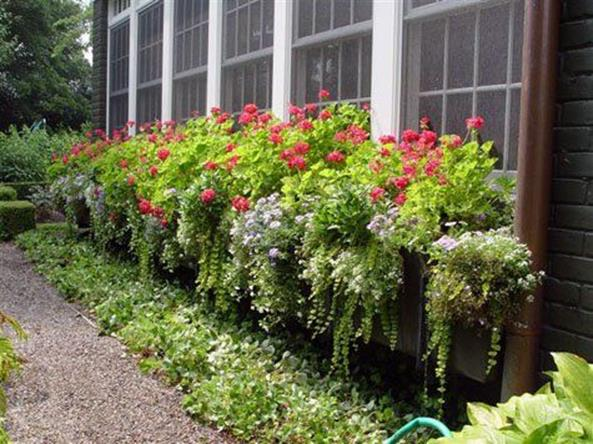 Best Beautiful Cascading Flowers For Window Boxes Ideas 35